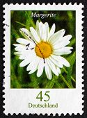 Postage Stamp Germany 2005 Common Daisy, Flowering Plant