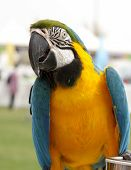 A beautful macaw closeview