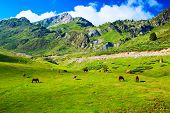 stock photo of feeding horse  - Pyrenees mountains with horses - JPG
