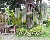 stock photo of tillandsia  - Spanish Moss decorating on the big tree near wooden chair and table in the garden - JPG