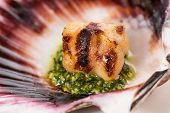 Studio Closeup Of Seared Scallops