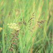 Retro Filtered Spring Grasses