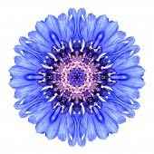 Blue Cornflower Mandala Flower Kaleidoscope Isolated On White