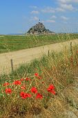 stock photo of mont saint michel  - Cornfield with poppies in background the Mont Saint Michel on the border of Brittany to Normandy France - JPG