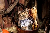 Pr-i-tty Kitty