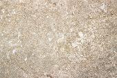 Concrete Jungle Texture