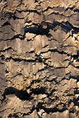 stock photo of rich soil  - The soil surface with rich and various texture - JPG