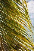 Palm Frond On Ocean