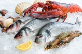 Fresh catch of fish and other seafood on ice