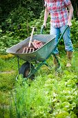 gardener with a wheelbarrow full of humus in the garden