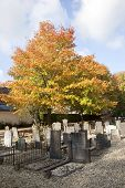 Graveyard And Autumn Colors