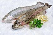 Rainbow trout with fresh herbs on ice at the fish market