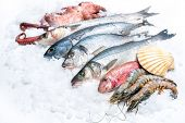 image of ice fishing  - Seafood on ice at the fish market - JPG