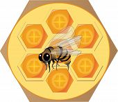 image of honey bee hive  - sticker depicting hive with honey bee and insect - JPG