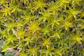stock photo of vegetation  - macro picture of vegetation background grass moss natural - JPG