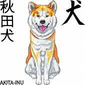 Постер, плакат: vector sketch dog Akita Inu Japanese breed smiles