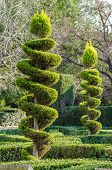 foto of tree trim  - Tall elegantly trimmed trees in a park - JPG