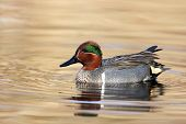pic of duck pond  - A Green - JPG