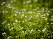 stock photo of wildflowers  - Summer witg white wildflowers on a natural light