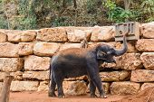 stock photo of gentle giant  - An Asian Elephant in zoo playing with conditioner - JPG
