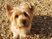 Windswept dog on the beach
