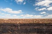 picture of boggy  - Irish peat bog landscape in county kerry - JPG