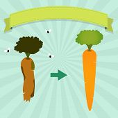 stock photo of rotten  - New carrot and rotten carrot with flies - JPG