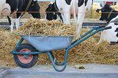 stock photo of wheelbarrow  - Wheelbarrow with straw in cow farm barn - JPG