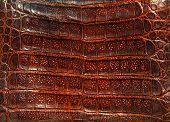 picture of crocodiles  - Crocodile genuine leather  - JPG