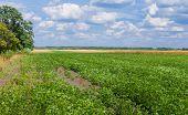 foto of maize  - Ukrainian agricultural landscape  - JPG