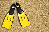 pic of fin  - this is yellow fins on sand beach - JPG