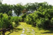 picture of marsh grass  - A small garden in gyeongpo lake park in gangneung South Korea - JPG