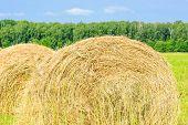 image of hay bale  - Round bales of hay in the field - JPG