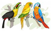 picture of tropical birds  - Tropical Birds vector Illustration - JPG