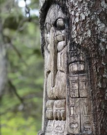picture of tlingit  - Tree carved by native Tlingit indians along a trail on top of Mt - JPG