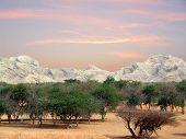 Árboles & montañas nr Al Ain