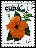 Vintage  Postage Stamp. Tues Flowers Pacifist. 3.