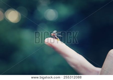 Firefly on a childs finger
