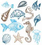 stock photo of seahorses  - Marine life drawing - JPG