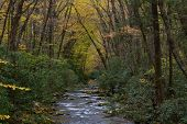 Mountain Stream With Banks Of Rhododendron And Arching Trees With Yellow Autumn Leaves, Great Smoky  poster