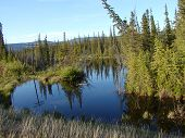 picture of damme  - still water of beaver pond in alaska permafrost - JPG
