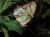 Butterfly Macro #7