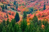 Mountains with fall autum colors from maple pine trees gold orange red and green poster