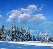 foto of winter landscape  - Winter landscape with snow in mountains Carpathians - JPG