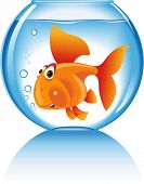 funny golden fish swims in the Fishbowl