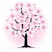 blossom cherry tree, vector illustration