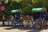 Resting donkeys harnessed to the cart resting in Mijas village. Andalusia. Spain poster