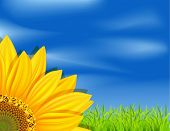 vector background with sunflowers on a blue sky and green grass