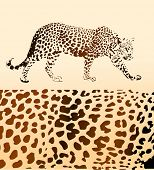 Background from leopard