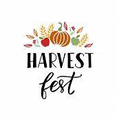 Harvest Fest - Hand Drawn Lettering Phrase With Autumn Harvest Symbols. Harvest Fest Poster Design.  poster